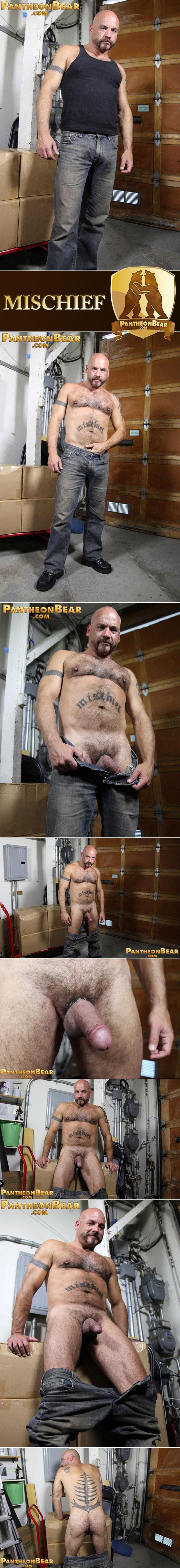 Hot muscle bear Mischief
